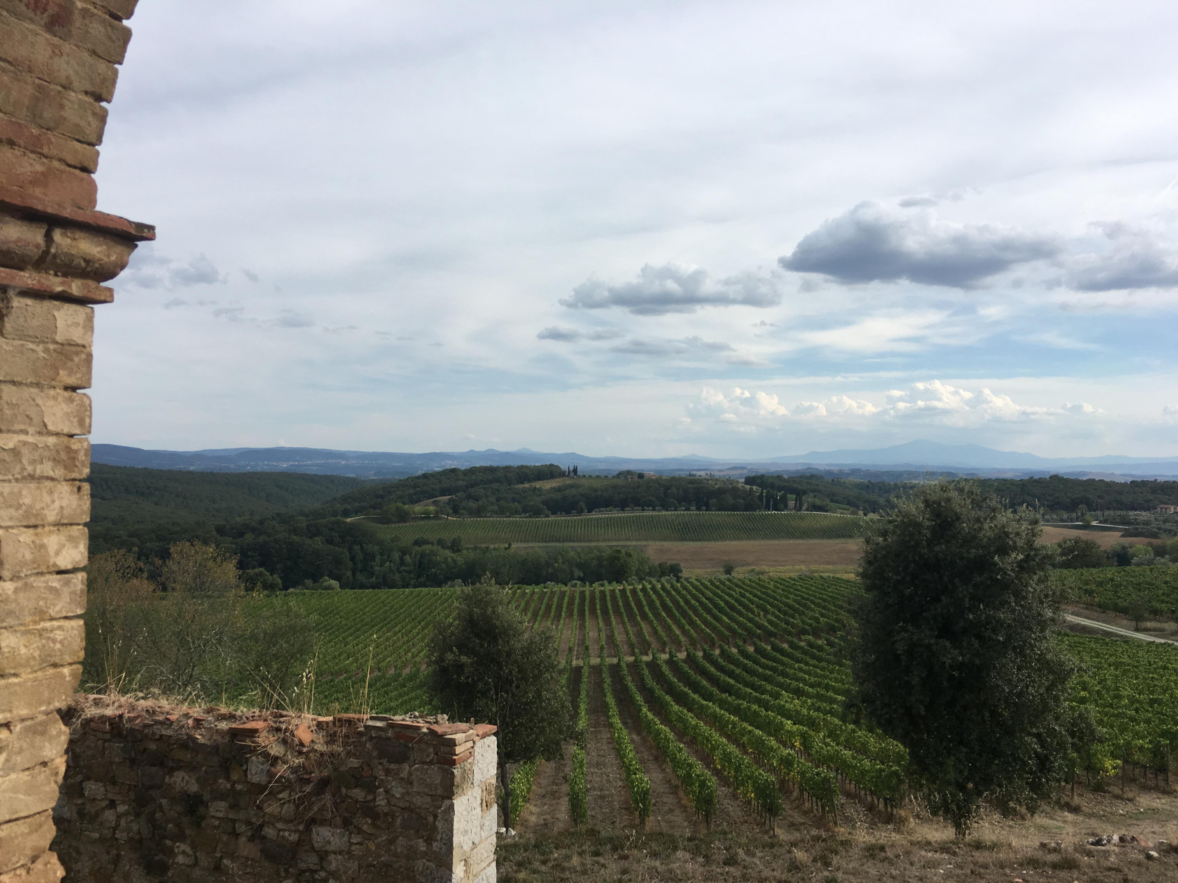 Vineyard View Tuscany