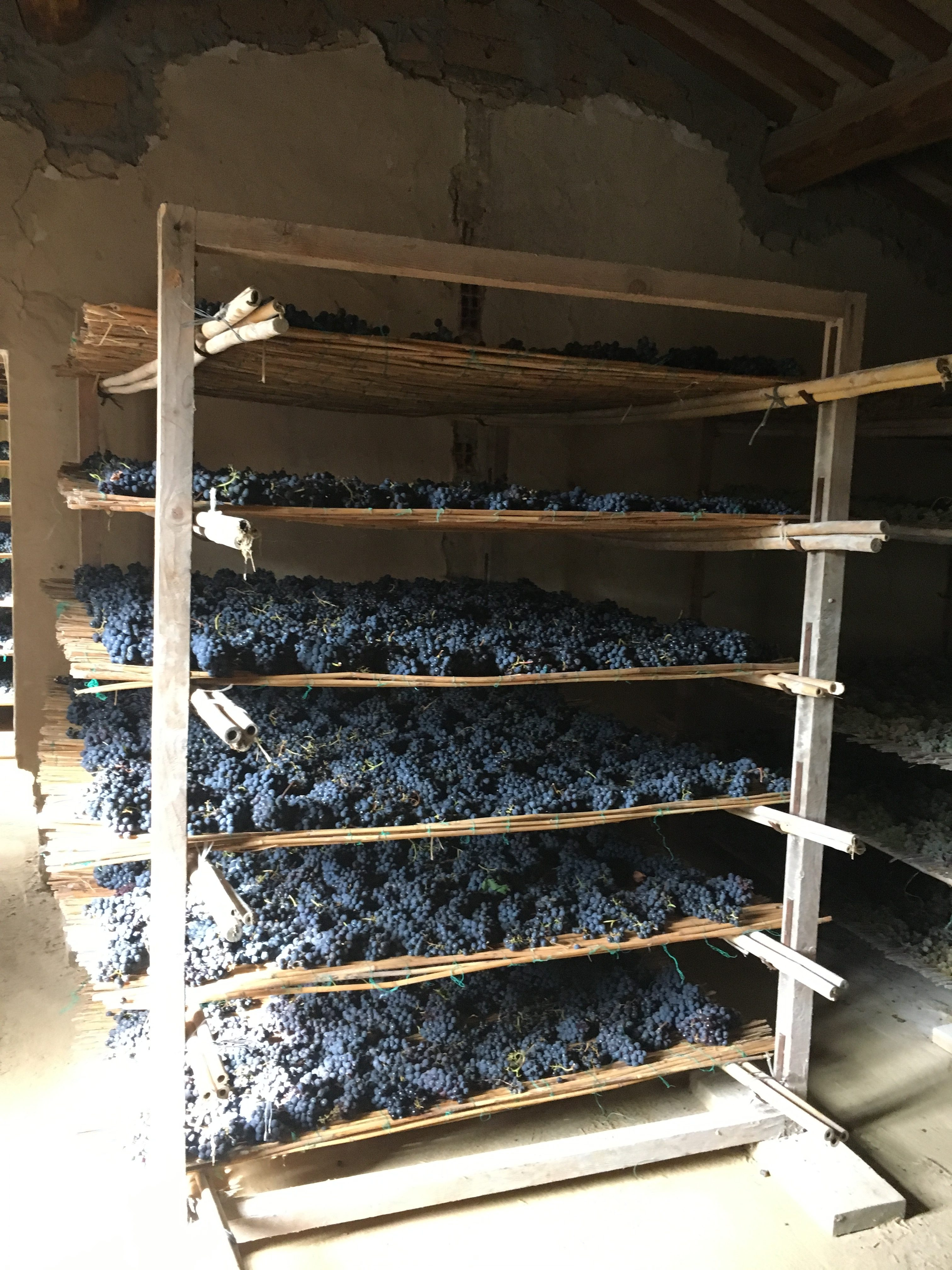 Drying Grapes
